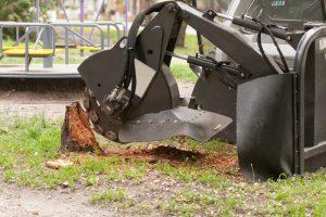 Stump being ground down