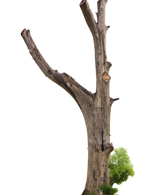 trimmed tree